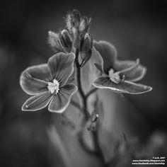 FotoFakty   Wioletta Kozłowska: Wiosna black and white