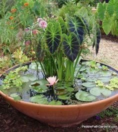 Container water garden ideas | Outdoor Areas
