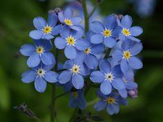 Sweet little flowers...