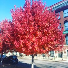 Fall color in Chicago.