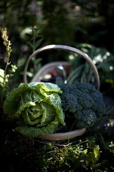 Moestuin | Explore Berta...'s photos on Flickr. Berta... has… | Flickr - Photo Sharing!