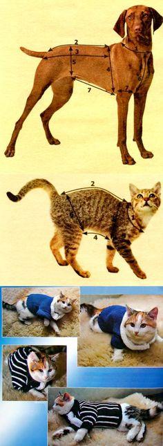 как снять мерки с кошек и собак - Самое интересное в блогах
