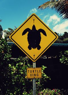 Turtle Crossing. i wanna live anywhere that this sign would be! : ) i love turtles!
