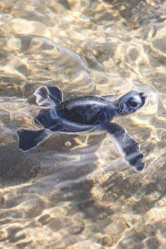 Little swimmer