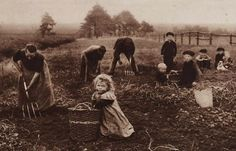 aardappels rooien met de hand en greep Old Pictures, Old Photos, Vintage Photographs, Vintage Photos, Vintage Gardening, Somewhere In Time, Old Photography, Calendar Girls, Working People