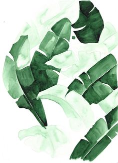 """20 x 30 """"Beverly III"""" Tropical Banana Palm Leaves Watercolor Giclee Fine Art Print Poster"""