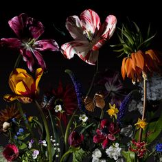 Hollandse romantiek in fotografie: Bas Meeuws - contemporary Dutch flower still life photography Art Floral, Dutch Still Life, Still Life Art, Floral Photography, Still Life Photography, Flowers Nature, Beautiful Flowers, Dark Flowers, Images D'art