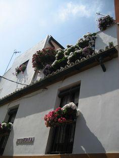 Más ventanas Sevillanas