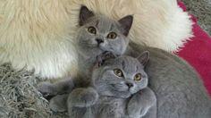 Jolle & Jabik ♥