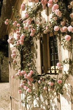 pink roses growing against old wood.
