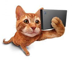 Tecnologia combina muito bem com gatos! Confira aplicativos para distrair e estimular seu pet.