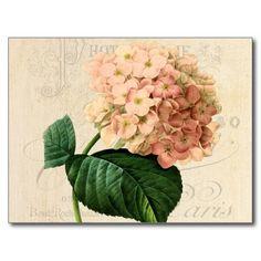 Vintage Peach Hydrangea Floral Postcard