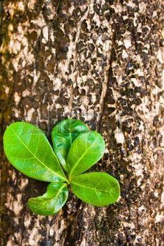 """registro antiguo con las nuevas hojas verdes brotes y fresco, """"vida nueva""""-concepto Foto de archivo"""