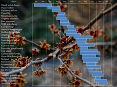 Chart of plants in bloom for feeding bees The plants on this chart, created by Dr. Tristram Seidler, can ensure a steady flow of pollen for bees for 11 months of the year.