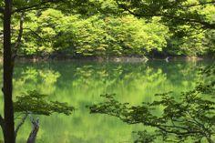 Shirakami-Sanchi(白神山地)/ Aomori・Akita(青森・秋田)