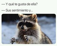 gustos son gustos Book Memes, Funny Animals, Funny Memes, Fox, Marvel, Books, Frases, Funny Things, Chistes