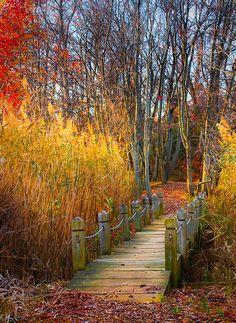 Sandy Point Autumn