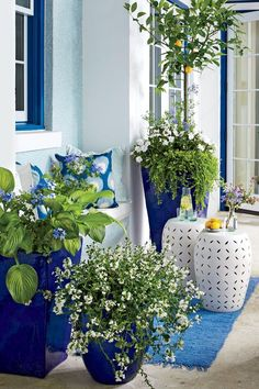 "Brighten Up with Blue and White - 30 Colorful Spring Container Gardens - Southernliving. An effortlessly cool vibe is achieved here with three oversize cobalt-glazed containers, spilling with pale blue, white, and green blooms to complement the bright yellow hue of the ""Meyer"" lemon tree."