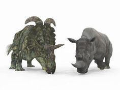 An Adult Albertaceratops Compared to a Modern Adult White Rhinoceros. : Custom Wall Decals, Wall Decal Art, and Wall Decal Murals   WallMonkeys.com