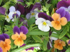 Love Violas!