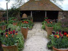 Spring At Perch Hill Farm, East Sussex, UK - Sarah Raven