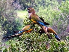 Aves – Naturalezaonline.cl