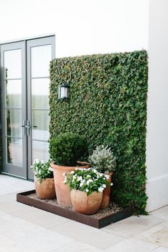 ivy covered wall - green wall - greenery doesn't always have to be on the floor