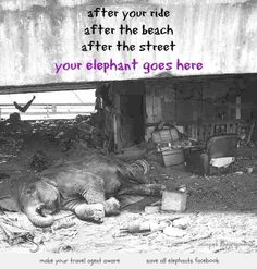 no suffering for elephants