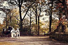 Styling Autumn Wedding | Real Wedding Autumn Wedding Transport | Vantage Horse and carriage| Confetti.co.uk