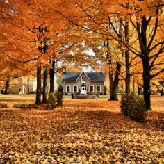 cottage, autumn