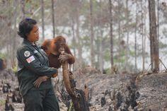 インドネシアの75%覆う焼き畑の煙