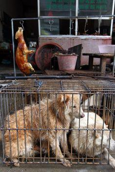 China's annual dog-eating festival prompts social media firestorm