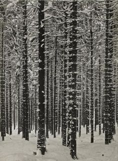 Albert Renger-Patzsch,  Mountain Forest in Winter, 1926.