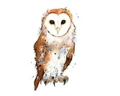 Barn Owl  5 x 7 inch print of original by NatalieIllustrations, £8.00
