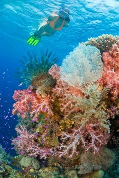 Snorkel in the warm turquoise waters of the Caribbean where you'll fin among a rainbow of tropical fish.