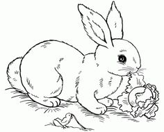 Free Rabbit eating cabbage coloring pages