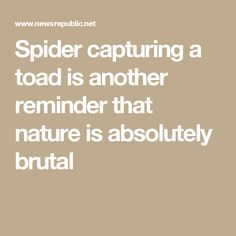 Spider capturing a toad is another reminder that nature is absolutely brutal