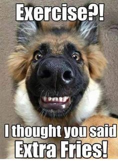 I Thought You Said Extra Fries - Funny Animals with Captions LOL