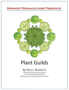 Free Plant Guilds E-Book from Midwest Permaculture. A plant guild is a collection of plants that individually could survive on their own, but perform much better when grouped together.