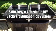 4 Easy Steps to Set-Up Your Own Backyard Aquaponics System - Tools And Tricks Club Aquaponics System, Hydroponic Farming, Backyard Aquaponics, Aquaponics Plants, Diy Hydroponics, Aquaponics Supplies, Backyard Farming, Permaculture, Culture Indoor
