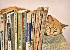 Books & cat by olg@