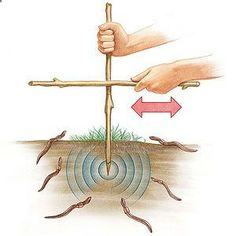 Calling All Worms This surprisingly simple technique will unearth some surprising results! Find an area of loose, slightly moist soil (the dirt under a log or landscape timber works well) and push a 12 to 18-inch-long stick two to three inches into the ground. Vigorously rub another stick from side to side against it for about 2 minutes and watch as any worms in the vicinity wriggle to the surface. Try several areas in the yard to see which ones are the hottest worm hangouts. handy for…