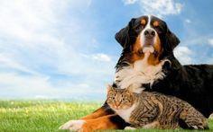 In the Shadow of a Friend...  FatCatsAnd LuckyDogs   Marketing & Publishing at Galye-Yam Inc.   LinkedIn