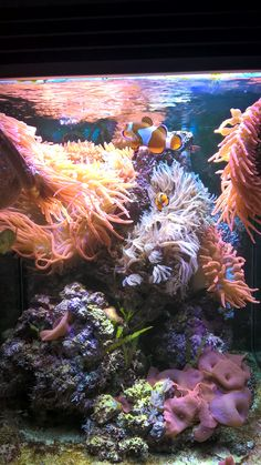 Front my aquarium