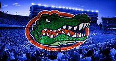 Go Gators! Uf Gator, Florida Gators Football, Tim Tebow, Sport Football, Patriots, College, Fan, Spaces, Orange