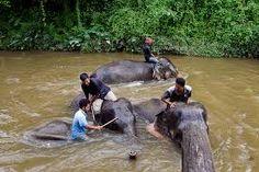 Bathing time @ Kuala Gandah Elephant Conservation Centre