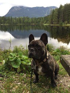 Insidertipp: Hundeurlaub bei der Wasnerin in Bad Aussee – Teil 1 Bad, French Bulldog, Dogs, Animals, Pet Dogs, Travel, Animales, Animaux, French Bulldog Shedding