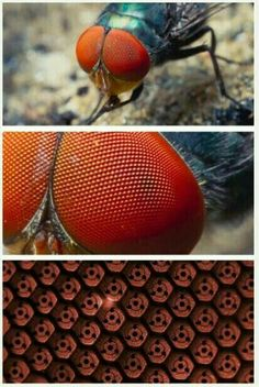 Why flies are so hard to kill(Uchiha blood). Naruto Sasuke Sakura, Naruto Shippuden Sasuke, Madara Uchiha, Naruto Art, Gaara, Funny Naruto Memes, Funny Video Memes, Funny Gifs, Art Vampire