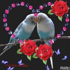 By esparrago Yanina Avalos - PicMix Beautiful Rose Flowers, Beautiful Flower Arrangements, Love Rose, Beautiful Love Pictures, Beautiful Gif, Beautiful Birds, Love You Gif, Love You Images, Blue Roses Wallpaper