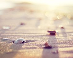 """""""It is perhaps a more fortunate destiny to have a taste for collecting shells than to be born a millionaire."""" Robert Louis Stevenson"""